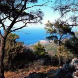 Lazaros Samos